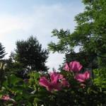 Wiosenny spacer zaudioprzewodnikiem poZakochanym Żoliborzu