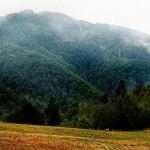Beyond the Forest – spotkanie zfilmem etnograficznym